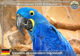 286 Kleinzoo Wasserstern Ingolstadt, DE - Hyacinth Macaw (Anodorhynchus Hyacinthinus) - Ingolstadt
