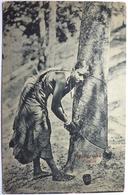 TAPPING RUBBER - CEYLON - Sri Lanka (Ceylon)