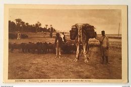 BENGASI CAMMELLO CARICO DI VERDURA - CARTOLINA SPEDITA CON ANNULLO MISSIONI SALESIANE FP - Libia