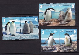 Territoire Antarctique Britannique British Antactic Territory2013XxManchot - PenguinY&T603 à 610 - Nuovi