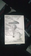 Affiche (GRAVURE) - EXPERIENCE FAITE PAR M. CAPAZZA à L'aide De Son Parachute - Posters