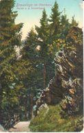 Allemagne - Basse-Saxe - Braunlage Im Oberharz - Partie A. D. Steinklippe - Braunlage