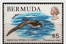 Bermuda/Bermudes: Petrello, Pétrels, Petrel, (Pterodroma Cahow) - Albatrosse & Sturmvögel