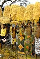 Afrique > BURKINA FASO En Pays Turka NIOFILA Près De Douna (nue Seins Nus Nu Récolte De Riz) *PRIX FIXE - Burkina Faso