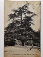 CPA 92 - Forêt De MEUDON - Le Grand Cèdre - Animation- 1921  - NO REPRO - Meudon