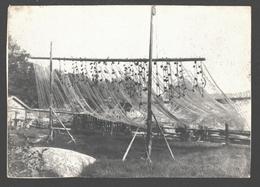 Fischernetze Am Estländischen Strand - Fishing - Foto Hoerschelmann - Estland