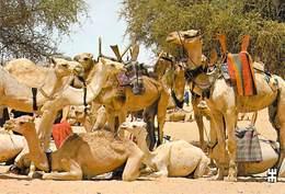 Afrique- BURKINA FASO  MARKOYE Province De Oudalan Nobles Montures Du Désert Au Repos *PRIX FIXE - Burkina Faso