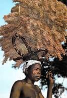 Afrique BURKINA FASO   (2) En Pays Turka Lourde Mais Précieuse Récolte De Sorgho *PRIX FIXE - Burkina Faso
