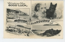 ROYAUME UNI - PAYS DE GALLES - Wishing You Good Luck From LLANDUDNO  (dogs - Chiens ) - Caernarvonshire