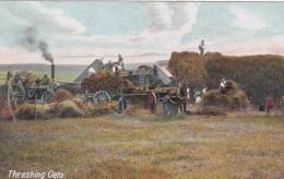 THRESHING OATS - Cultivation