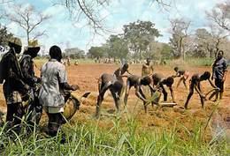 Afrique-BURKINA FASO En Pays TIERENGO NIENKAR Près De Banfora HUSAALE Culture *PRIX FIXE - Burkina Faso