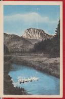 Bird, Birds, Geese ROMANIA Postal Stationery 1961 Very Very Rare - Oche