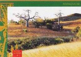 "MADAGASCAR/COLL. ""VISAGES DE MADAGASCAR"" N° 34 (dil393) - Draguignan"