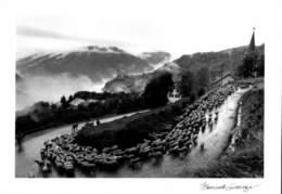 PHOTOGRAPHE BERNARD GRANGE - MONTAGNE ET MOUTONS / A 222 - Illustrateurs & Photographes