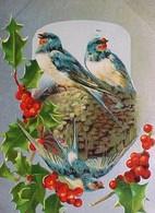 Cpa NOËL OISEAUX Sur Leur NID , HOUX , Fond Argenté , 1906 , BIRDS On NEST , HOLLY Early PC , Silver  Back  CHRISTMAS - Noël
