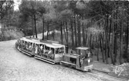 33-CAP-FERRET- LE PETIT TRAIN FORESTIER - France