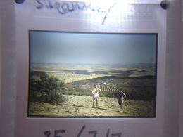 Ancienne Diapositive ESPAGNE Diapo Slide SPAIN Vintage Annees 60 - 70's Toledo Suzanne - Diapositives (slides)