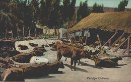 CHILE - CHILI Postcard, ETHNIC - NATIVE, Paisaje Chileno, GLOSSY PAPER - Chili