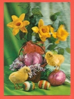 TRIDIMENSIONALI -ANIMALI - UCCELLI . PLCINI - BUONA PASQUA - Cartoline Stereoscopiche