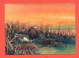 TRIDIMENSIONALI -ANIMALI - UCCELLI . - Cartoline Stereoscopiche