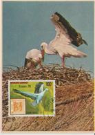 Carte Maximum Oiseaux Gabon PA 215 Cigognes - Gabon