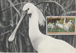 Carte Maximum Oiseaux Sénégal PA 135 Spatules - Senegal (1960-...)