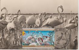 Carte Maximum Oiseaux Sénégal PA 139 Flamants Roses - Sénégal (1960-...)
