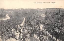 33-PARZON- LES VENDANGES AU DOMAINE DE PARZON - France