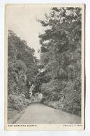 The Maranta Avenue - Postcards