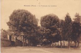 BE17-  ACHAT IMMEDIAT SEZANNE  DANS LA MARNE  LA PROMENADE DES CORDELIERS - Sezanne