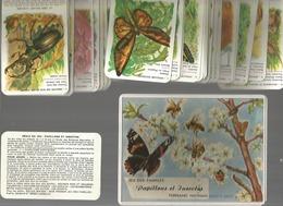 Vends Jeu De Familles De Fernand Nathan Papillons Et Insectes - Other