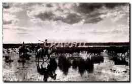 Camargue - Un Gasado - Traversee D&#39un Marais - Passage In A Marsh - CPA - Non Classificati