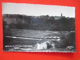 Cpsm 91 - MEREVILLE - Les Cressonnières Voyagé En 1952 - Mereville