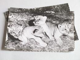 Génoline Colocrine Lionceaux, Panthère Noire, Guépard 3 Cartes Publicitaires 1959 Lions Félins - Lions
