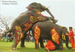 Elephant Olifant / Thailand - Éléphants