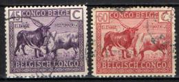CONGO BELGA - 1925 - BESTIAME DEI WATUSSI - USATI - Congo Belga