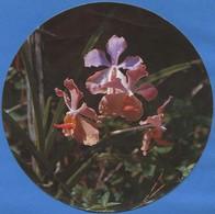 GUYANE FRANCAISE - FLORE - Orchidée / Orchid - Guyane