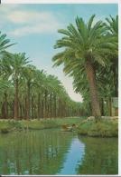 Iraq Basrah Uncirculated Postcard - Iraq