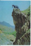 Kapan Uncirculated Postcard - Armenia
