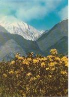 Georgia Caucasian Mountains Uncirculated Postcard - Georgia