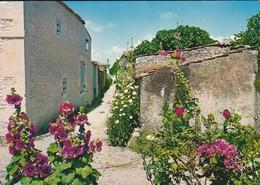 17-----TALMONT--village Charentais--les Roses Trémières--voir 2 Scans - France