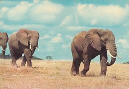 KENYA - African Fauna - Elephants 1974 - Kenya