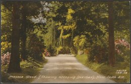 Mosses Wood Showing Weeping Beeches, Leith Hill, Surrey, 1965 - Frith's Postcard - Surrey