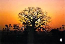 Afrique-BURKINA FASO  Le Baobab Géant De La Savane Soleil Couchant (arbre Tree Sunset)*PRIX FIXE - Burkina Faso