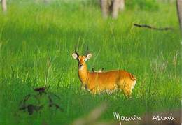 Afrique > NIGER  COB De BUFFON Parc Du W (Kobus Kob Cobe Antilope)  MAURICE ASCANI 66  *PRIX FIXE - Niger