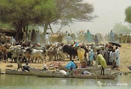 Afrique > NIGER  Marché Des Boeufs à AYOROU (pirogue)-  MAURICE ASCANI 15 *PRIX FIXE - Niger