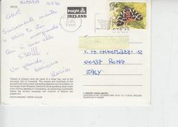 IRLANDA  1994 - Unificato 864 - Farfalla - 1949-... Repubblica D'Irlanda