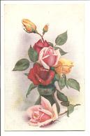 Fair Fora - Roses - A. F.  Armitage - Tuck Oilette 8455 - Flowers