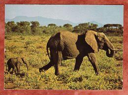 Elefant (55781) - Elefanten