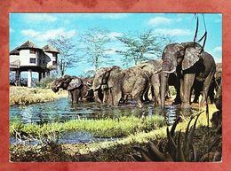 Trinkende Elefanten (55782) - Elefanten
